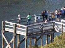 Manatee Viewing Center(2)